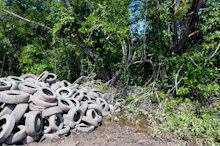 BRU190511J0032  Dumped and discared old tyres in the bush, Brunei Darussalam, Borneo