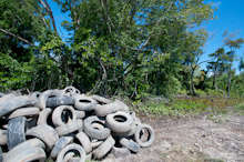 BRU190511J0033  Dumped and discared old tyres in the bush, Brunei Darussalam, Borneo