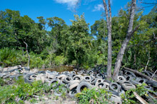 BRU190511J0034  Dumped and discared old tyres in the bush, Brunei Darussalam, Borneo
