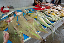 BRU200511J0067  Giant Guitarfish, rhynchobatus djiddensis, and many other species of fish for sale in the wet markets, Brunei Darussalam, Borneo